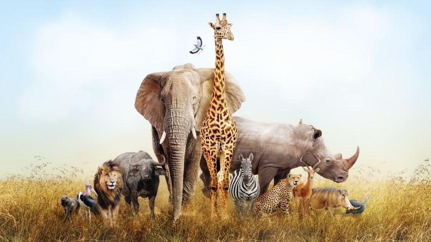 Safaritocht door de Beekse Bergen
